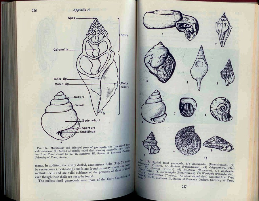 Matthews III, William H.: Fossils. An introduction to prehistoric life.