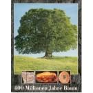 Herm, D.: 400 Millionen Jahre Baum.